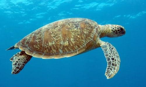 Mon Repos Turtle Tour